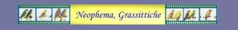 Neophema, Grassittiche & Mutationen